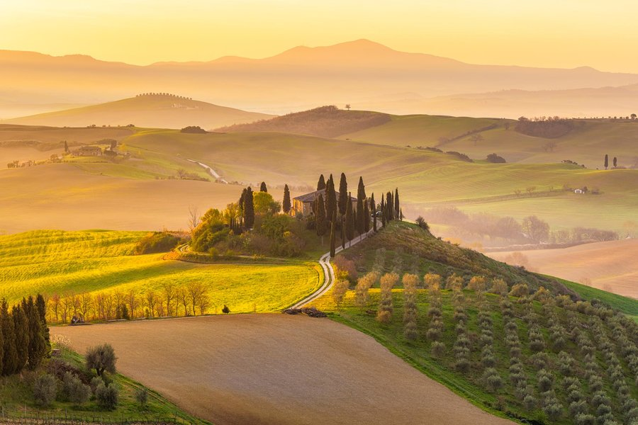 Italy, Tuscany, San Quirico D'Orcia, Podere Belvedere, Green hills, olive gardens and small vineyard under rays of morning sun